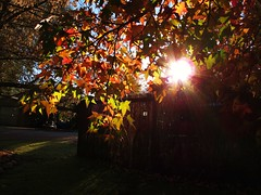 Autumn Morning Light (Sean of the Camera) Tags: morning autumn light sun leaves bright victoria alpine porepunkah