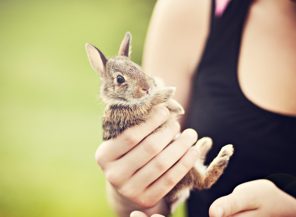 Baby bunny *EXPLORED! Thanks Flickr! :)