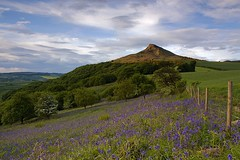 Evening Roseberry (David Relph) Tags: sunset bluebells landscape spring yorkshire greatayton northyorkshire roseberry roseberrytopping ndgradfilters