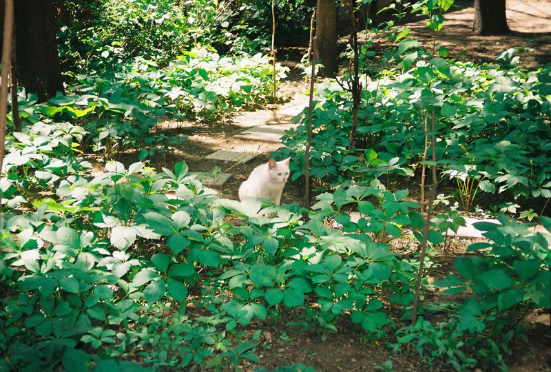 院子 猫咪1