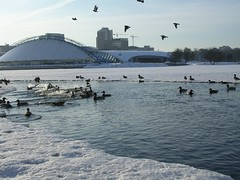Minsk city ducks (Genadz Sasnouski) Tags: birds ducks belarus minsk svislachriver