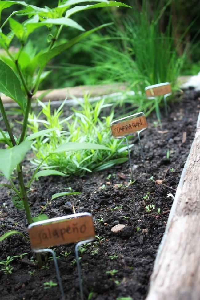 garden 6.16