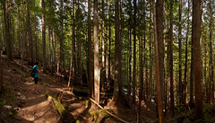 Forest (absencesix) Tags: family trees people panorama plants usa nature forest washington girlfriend unitedstates iso400 events may noflash trail northamerica 1020mm 16mm pinetrees hikes locations 2010 locale verticalstitch canon30d mountbakersnoqualmienationalforest canoneos30d mtbakersnoqualmienationalforest laketalapustrail camera:make=canon geo:state=washington exif:make=canon exif:iso_speed=400 haleymontgomery apertureprioritymode hasmetastyletag hascameratype naturallocale selfrating3stars exif:focal_length=16mm 160secatf63 may152010 geo:countrys=usa exif:lens=100200mm exif:model=canoneos30d camera:model=canoneos30d exif:aperture=ƒ63 laketalapus05152010 subjectdistanceunknown geo:lat=47408993500001 geo:lon=121512806 geo:city=mountbakersnoqualmienationalforest mountbakersnoqualmienationalforestwashingtonusa 47°2432n121°3046w