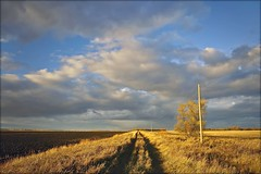 . track through the field . (susanonline (busy these days)) Tags: sunset sunlight tree grass clouds tracks manitoba poles prairie goldenhour beautifulday blueandgold hydropoles roadthroughthefields