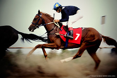 Competition II (54ka) Tags: horses horse gambling motion blur rivalry sport racetrack race speed movement track risk ride action champion trace fast competition run victory several riding pony jockey winner whip strong strength win roar rider gamble triple bet derby stallion saddle thoroughbred winning gallop hippodrome wager rival