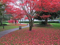 Civic Square at its colourful best (D70) Tags: autumn red canada its square maple bc best acer burnaby civic colourful palmatum