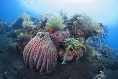 Little island (Arne Kuilman) Tags: bali coral liberty wideangle diving reef sponge corals tulamben usatliberty