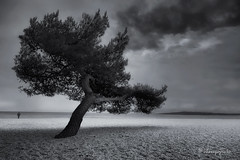 of storms and men (cherryspicks (on/off)) Tags: monochrome blackandwhite beach storm tree landscape man person weather adriatic croatia sea mood