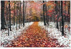 Two Seasons - 2 - (Ben Heine) Tags: autumn trees red wild wallpaper orange snow cold art fall wet colors leaves composition forest season print poster hope freedom leaf bomen nikon colours d70 time ben quebec pov earth path couleurs air perspective at