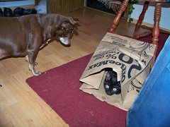 OMG! The bag ate my puppy!