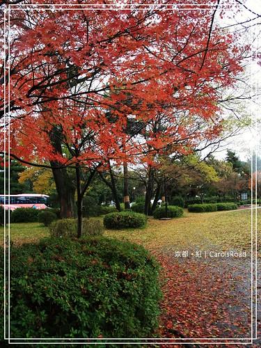 2009-12-11 京都 098 R