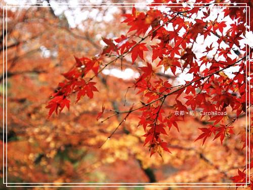 2009-12-11 京都 030 R