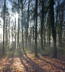 Into the light (Rich3591) Tags: trees woods hampshire forestofbere challengeyouwinner justpentax pentaxk20d yourwonderland