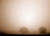 A morning smile (.I Travel East.) Tags: life morning trees light sun sunlight tree sepia louisiana duotone lucio deepsouth southlouisiana zacharylouisiana plankroad nikkor70200mmf28vr d700 nikond700 amorningsmile