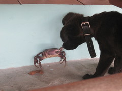 Yohan and a Fearless Crab