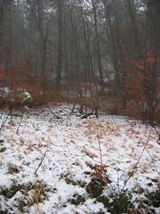 Frontignano: bosco innevato (Gaspa) Tags: macerata norcia castelluccio ussita visso frontignano canona8