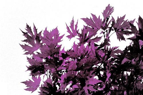 Black, Purple, White