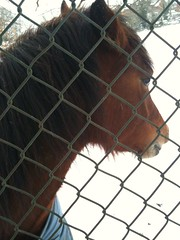 Winter pony friend (lovemaus) Tags: winter horse snow animal fence pony