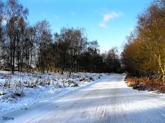 Impassable (  * Mary *   ) Tags: uk snow nature freezing slippery icey cannockchase impassable breakneck