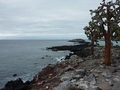 Galapagos01