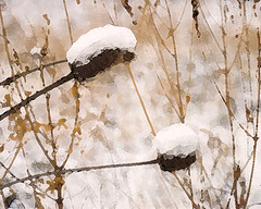 SnowPlant (lutzwendy) Tags: art wendys