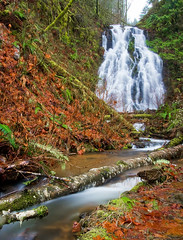 Oh, hello there (Kyle Kruchok) Tags: fall water leaves rain oregon creek canon river kyle