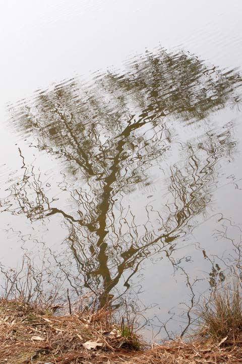 Branch Reflected