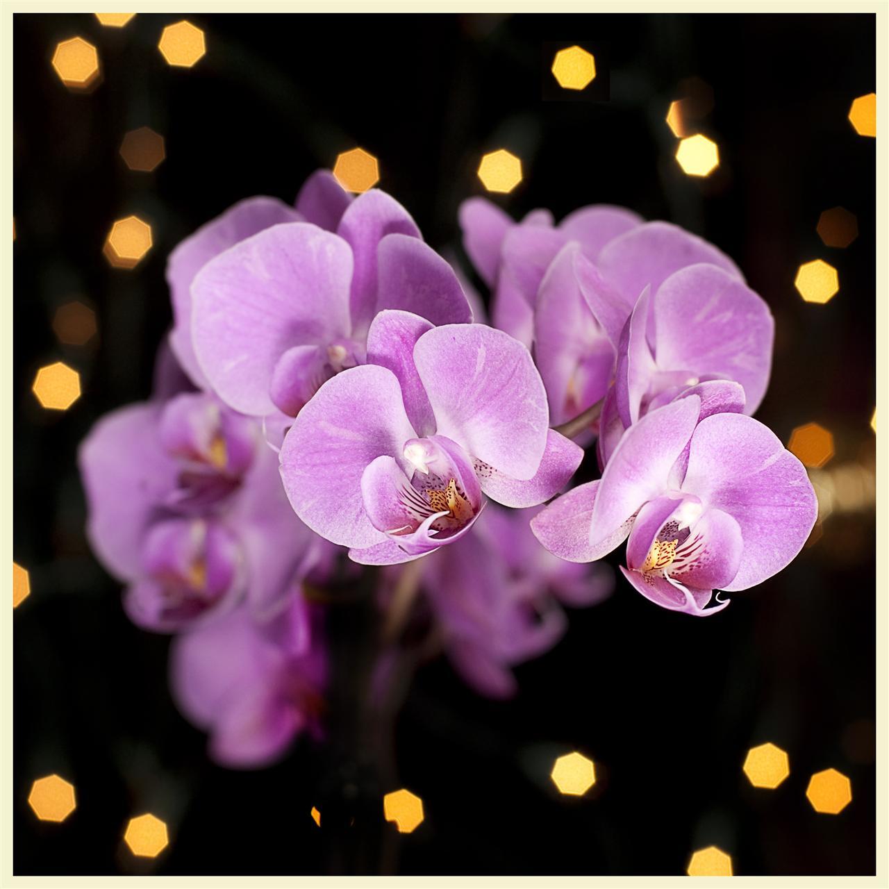 Full Bloom (19 of 365)