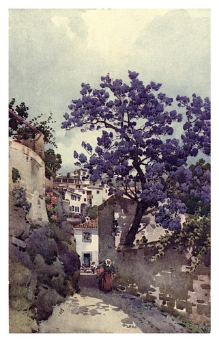 020- Arbol de Jacaranda en Madeira-The flowers and gardens of Madeira - Du Cane Florence 1909