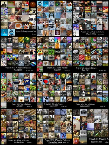 Project 365: A year in pictures!
