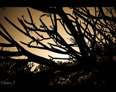 The darkness 8/53 (Jchetan) Tags: new sunset abstract colors shapes change trials chetan hosur