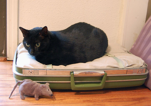 miles in his new suitcase bed
