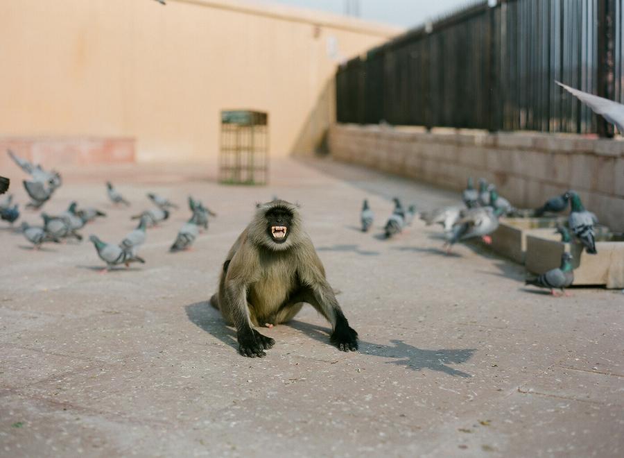 monkey attack! - India