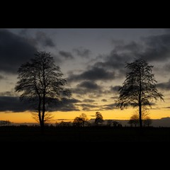 Arbolitos (Hans van Reenen) Tags: trees sunset sky tree silhouette twilight fav50 dusk nederland thenetherlands silhouttes k7 schemer rouveen 20100129