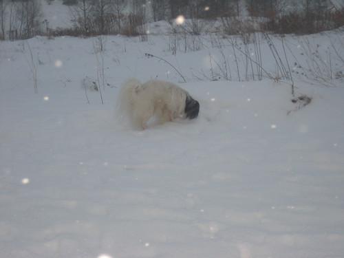 Ganz rein in den Schnee
