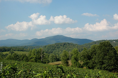 georgia vineyard