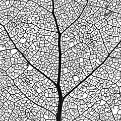 "Leaf Skeleton Network - macro photo - #4 of 4 (IronRodArt - Royce Bair (""Star Shooter"")) Tags: plants macro tree texture nature up leaves skeleton photography leaf pattern patterns tissue system cottonwood vein network veins vascular branching venation cellulose veination closeupclose lignin"