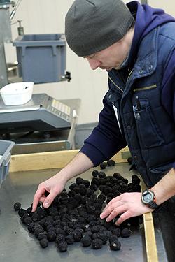 truffle sorting