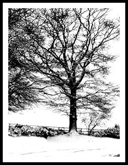 THE SNOW TREE (lord.vill ( BAD HANDS JUST NOW )) Tags: world life camera old uk ireland winter bw irish color love me water beauty photography star photo europe flickr lough day all looking photos map south maps famous olympus belfast photograph lucky northernireland ni lovely now northern today happening 2010 ulster antrim feb28 march1 e500 zd march2 colourcolor flickraward modernireland worldphotos lordvill