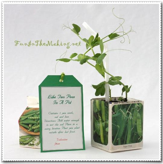Sweet Pea Planter