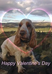 To all Rona's friends on Flickr! (cocopie) Tags: day valentines rona