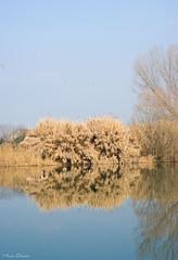 Cespugli-sull'Adige (Marco_Olivieri) Tags: italy landscape italia mr verona marco paesaggio adige olivieri parona