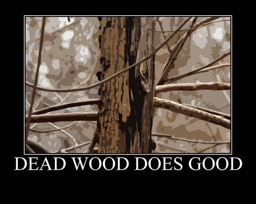 Dead Wood Poster