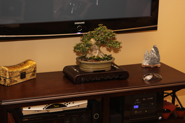 TV Stand Bonsai