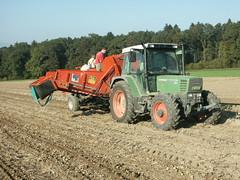 pdt-01 (vullieminpomy) Tags: de terre cultures pomme
