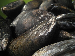 Mussels close-up