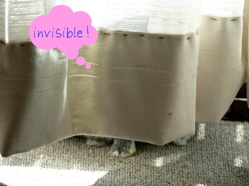 Binky hides