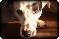 Mi fiel compañero (T. de T) Tags: dog animal cane amigo perro canino belleza fiel compañero