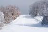 path within a path (kosova cajun) Tags: winter mountain snow landscape hiking macedonia balkans skopje makedonija vodno peisazh shkupi shkup southeasterneurope maqedonia