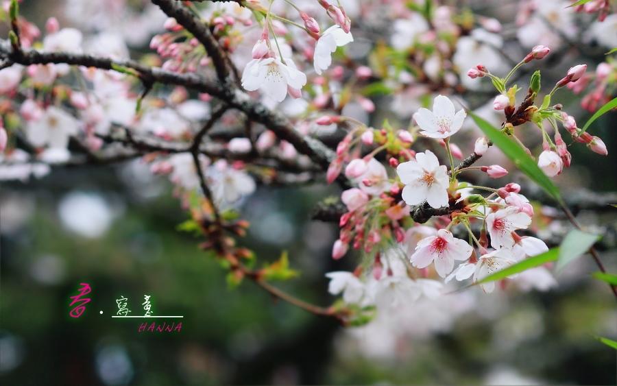 春.寫意-HANNA